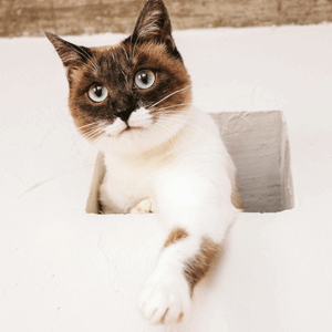 ペット関連フランチャイズ